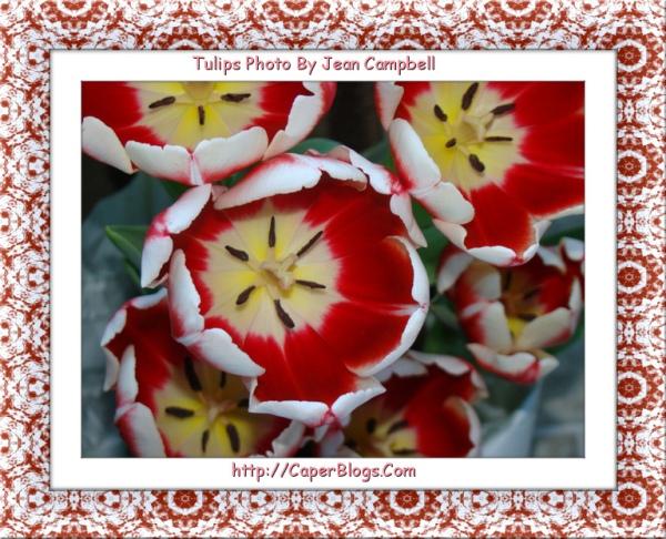 Tulipsmain